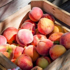 Guide to Buying, Storing, and Cooking Fresh Peaches